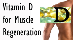 vit-d-for-muscles.jpg