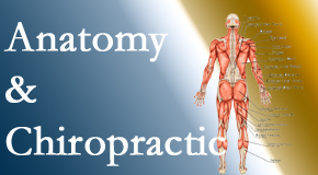 Back And Neck Care Center proudly delivers chiropractic care based on knowledge of anatomy to diagnose and treat spine related pain.