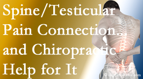 Back And Neck Care Center explains recent research on the connection of testicular pain to the spine and how chiropractic care helps its relief.